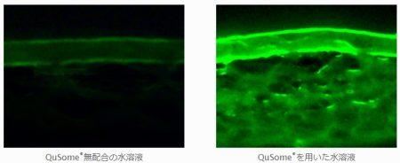 ビーグレン QuSomeの経皮吸収性の比較実験の画像