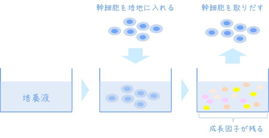 ヒト幹細胞エキスの生成と抽出 図解